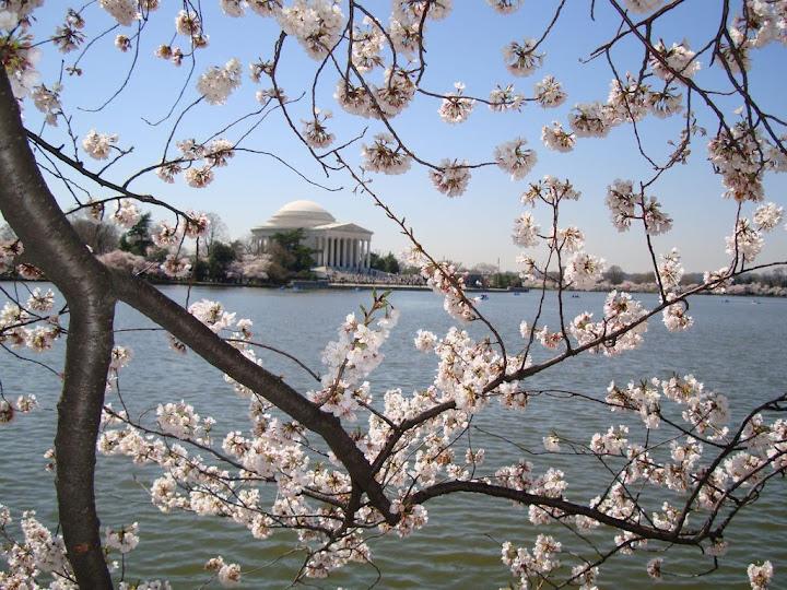 @FXUA | Annual Cherry Blossom Visit!